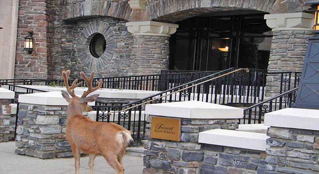 Accommodation Near Banff Canada